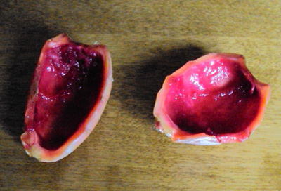 the skin of prickly cactus pear tuna fruit