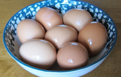 brown eggs in shell