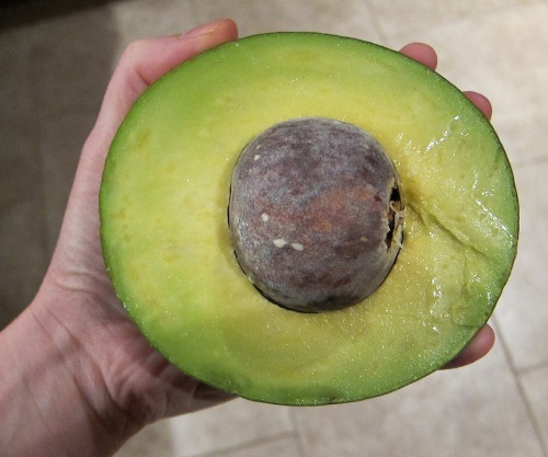 giant avocado half