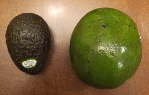 giant avocado next to regular avocado