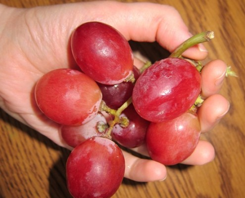 huge red globe holiday grapes