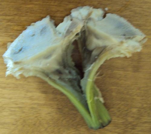 eating artichoke heart