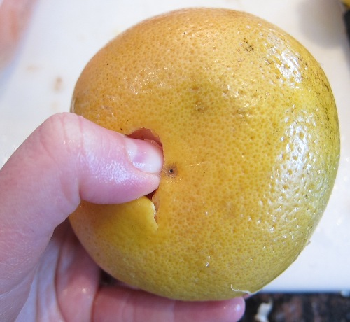 starting to peel a grapefruit