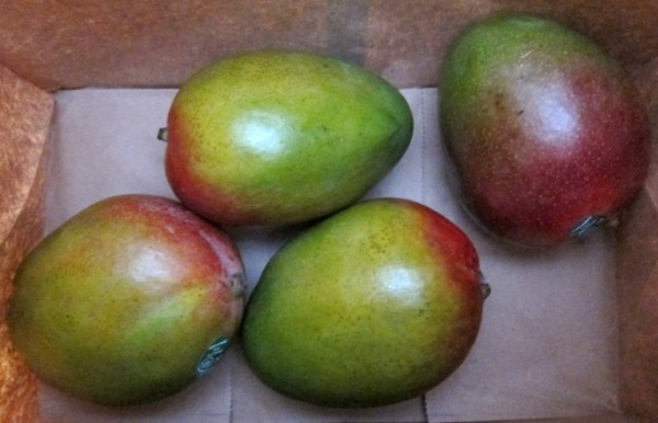how to ripen mangos