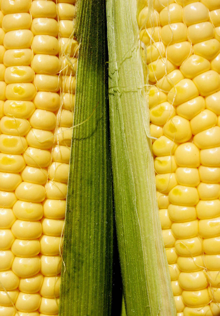 How To Cook Corn In The Husk